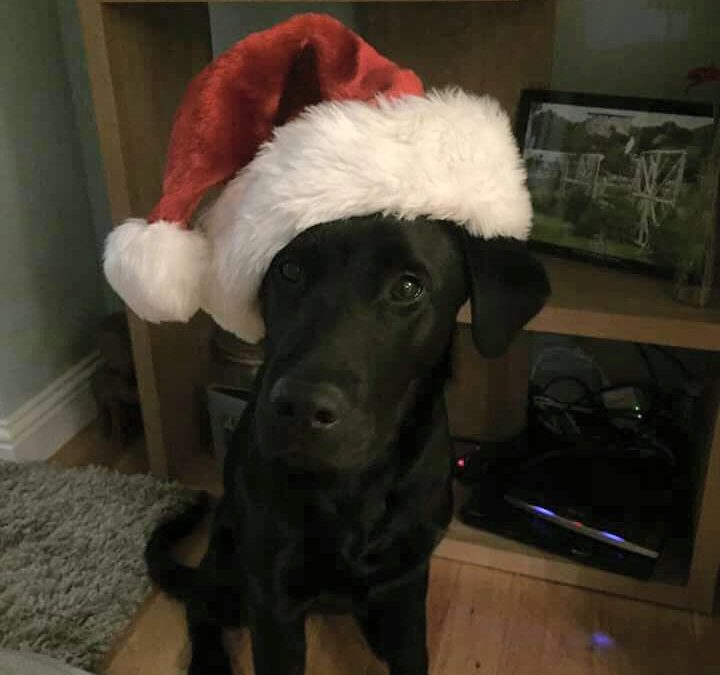 Be Careful With Your Pets This Christmas