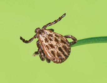 It's Tick Season!